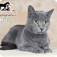 Adopt A Pet :: Rizzo - Broadway, NJ