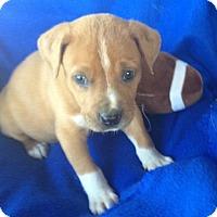 Adopt A Pet :: Cooper - Hartford, CT