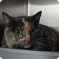 Adopt A Pet :: April - Elyria, OH
