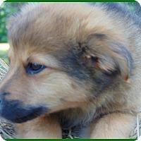 Adopt A Pet :: Cocoa - Marlborough, MA