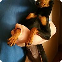 Adopt A Pet :: Porsche - Sacramento, CA