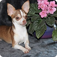 Adopt A Pet :: Tobi - Salem, NH