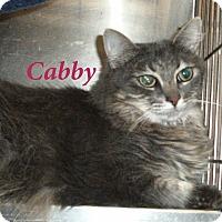 Adopt A Pet :: Cabby - El Cajon, CA