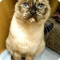Adopt A Pet :: Kameko - Chattanooga, TN