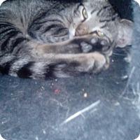 Adopt A Pet :: Franklin - YOUNGTOWN, AZ