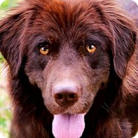 Adopt A Pet :: SAMUEL(SWEET--KIND--PLAYFUL!! - Wakefield, RI