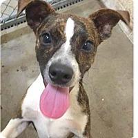 Adopt A Pet :: Columbus - Springdale, AR