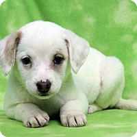Adopt A Pet :: BETTY - Westminster, CO