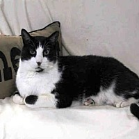 Adopt A Pet :: TUFFY - Hampton Bays, NY