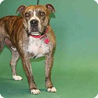 Adopt A Pet :: *LEO* - Salt Lake City, UT