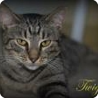 Adopt A Pet :: Twiggy - Middleburg, FL