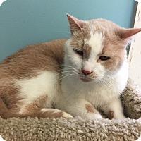 Adopt A Pet :: Sunny D - Newburgh, IN