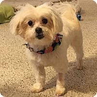 Adopt A Pet :: Oscar - Overland Park, KS