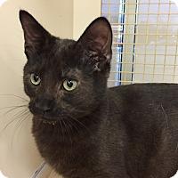 Adopt A Pet :: Alaska - Islip, NY