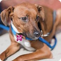 Adopt A Pet :: Hannah - Chaska, MN