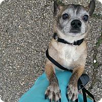 Adopt A Pet :: Ben - Pompton Lakes, NJ
