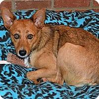 Adopt A Pet :: Lillie Bell - Homewood, AL