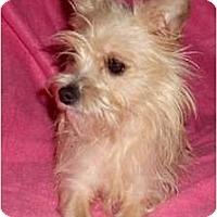 Adopt A Pet :: Rochelle - Mooy, AL