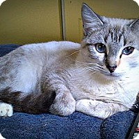 Adopt A Pet :: Zinnia - Seminole, FL