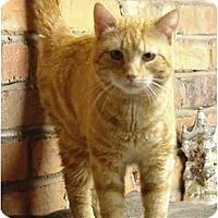 Adopt A Pet :: Pierce - Chesapeake, VA