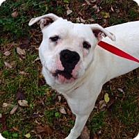 Adopt A Pet :: Ogie - Alpharetta, GA