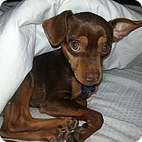 Adopt A Pet :: Isaac - Austin, TX