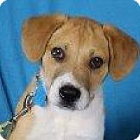 Adopt A Pet :: Conrad - Minneapolis, MN