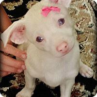 Adopt A Pet :: Carina - Gilbert, AZ