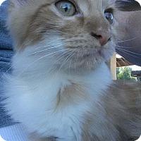 Adopt A Pet :: Quincy - Chandler, AZ