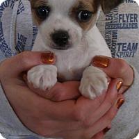 Adopt A Pet :: MOUSE PUPS C - Corona, CA