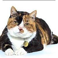 Adopt A Pet :: Tillalily - San Luis Obispo, CA