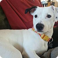 Adopt A Pet :: Annie - Rockaway, NJ