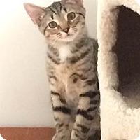 Adopt A Pet :: Bixby - Merrifield, VA