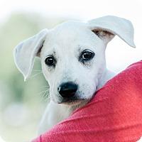 Adopt A Pet :: Charlotte $250 - Seneca, SC