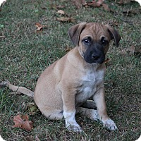 Adopt A Pet :: Eddie - New Oxford, PA