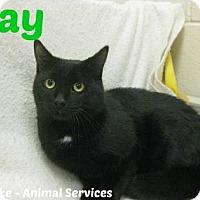 Adopt A Pet :: Ray - Hamilton, ON