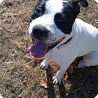 Adopt A Pet :: THOREAU - Williamsburg, VA