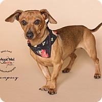Adopt A Pet :: Dempsey - Houston, TX
