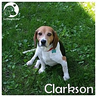 Adopt A Pet :: Clarkson - Pittsburgh, PA
