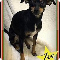 Adopt A Pet :: Zoe-Fostered - Rustburg, VA