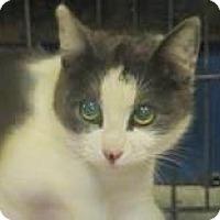 Adopt A Pet :: Sugar Plum - Lincolnton, NC