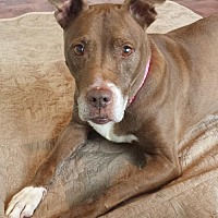 Adopt A Pet :: 'Sug' aka Sugar - Atlanta, GA