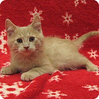 Adopt A Pet :: Apricot - Redwood Falls, MN