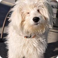 Adopt A Pet :: Ray - Milpitas, CA