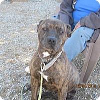 Adopt A Pet :: Bree - Littlerock, CA