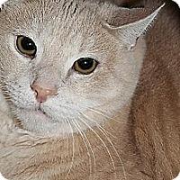 Adopt A Pet :: Peaches (Westhampton) - New York, NY