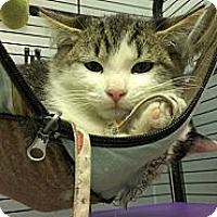 Adopt A Pet :: Coolio - Richboro, PA