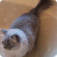 Adopt A Pet :: North - Ennis, TX
