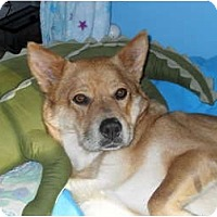 Adopt A Pet :: Caramel - Richmond, VA