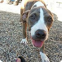 Adopt A Pet :: Bubbles - Vernon Hills, IL